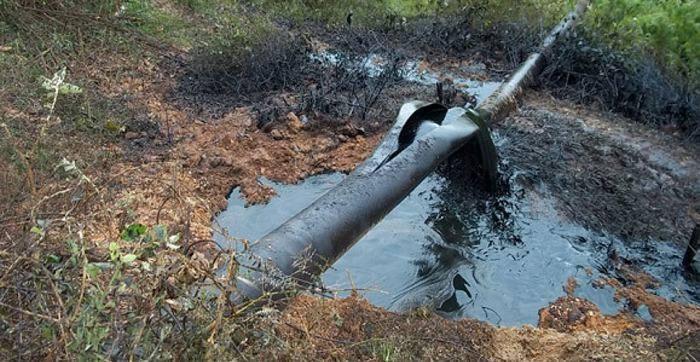 delitos ambientales