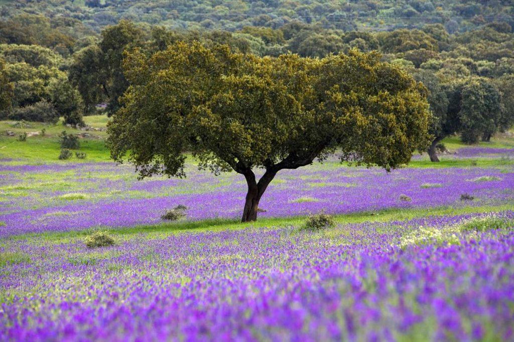 Primavera en España 2