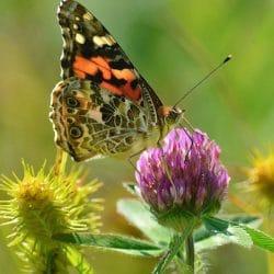 Primavera: ¿qué es?, características, historia y mucho más