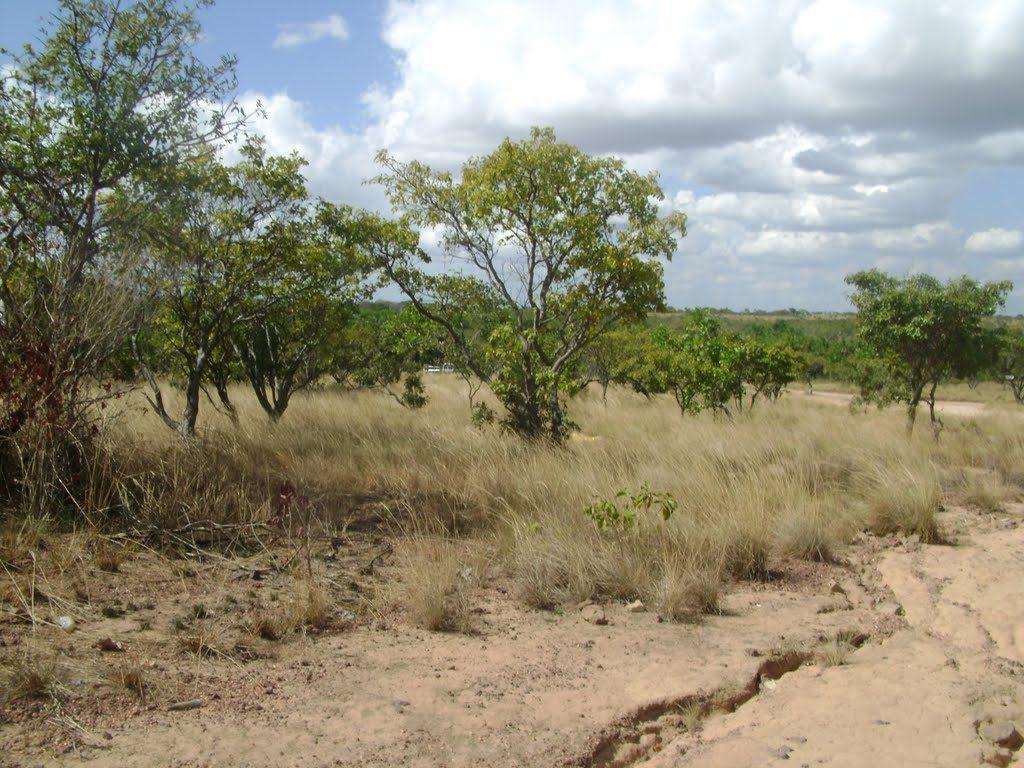 que hacer en caso de sequía