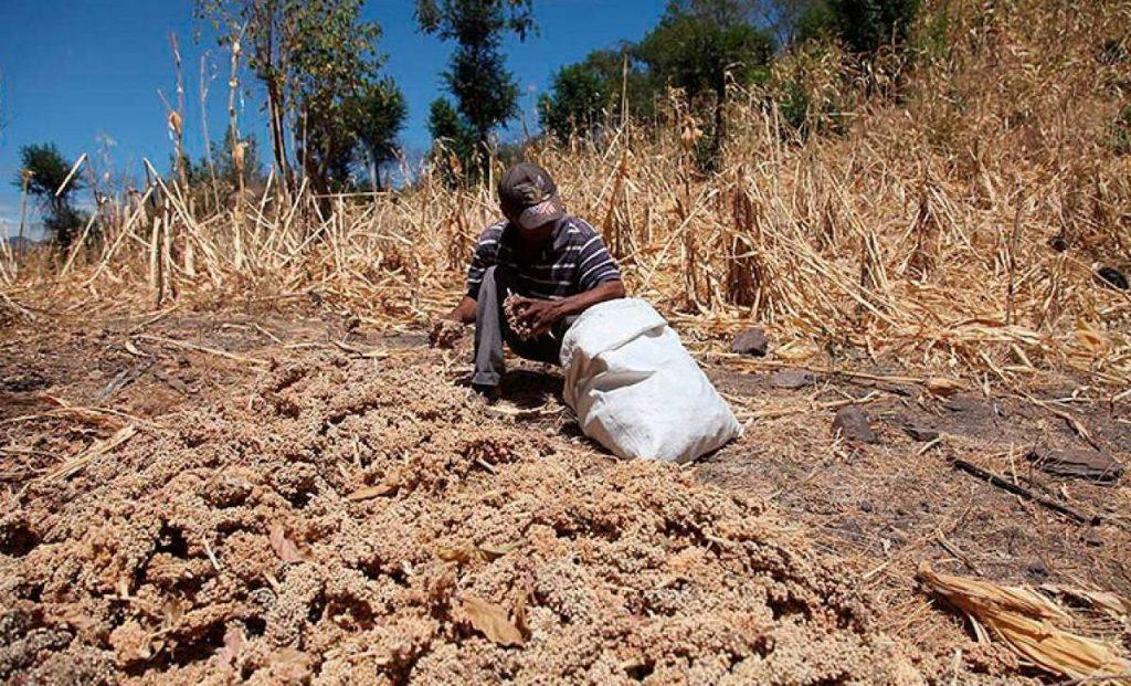 qué hacer en caso de sequía