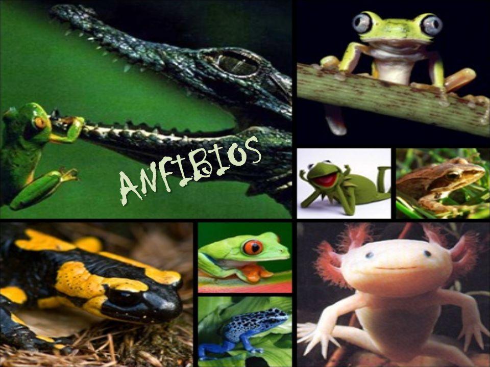 Anfibios 15