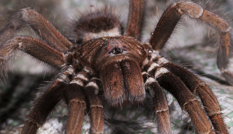 Arañas-1