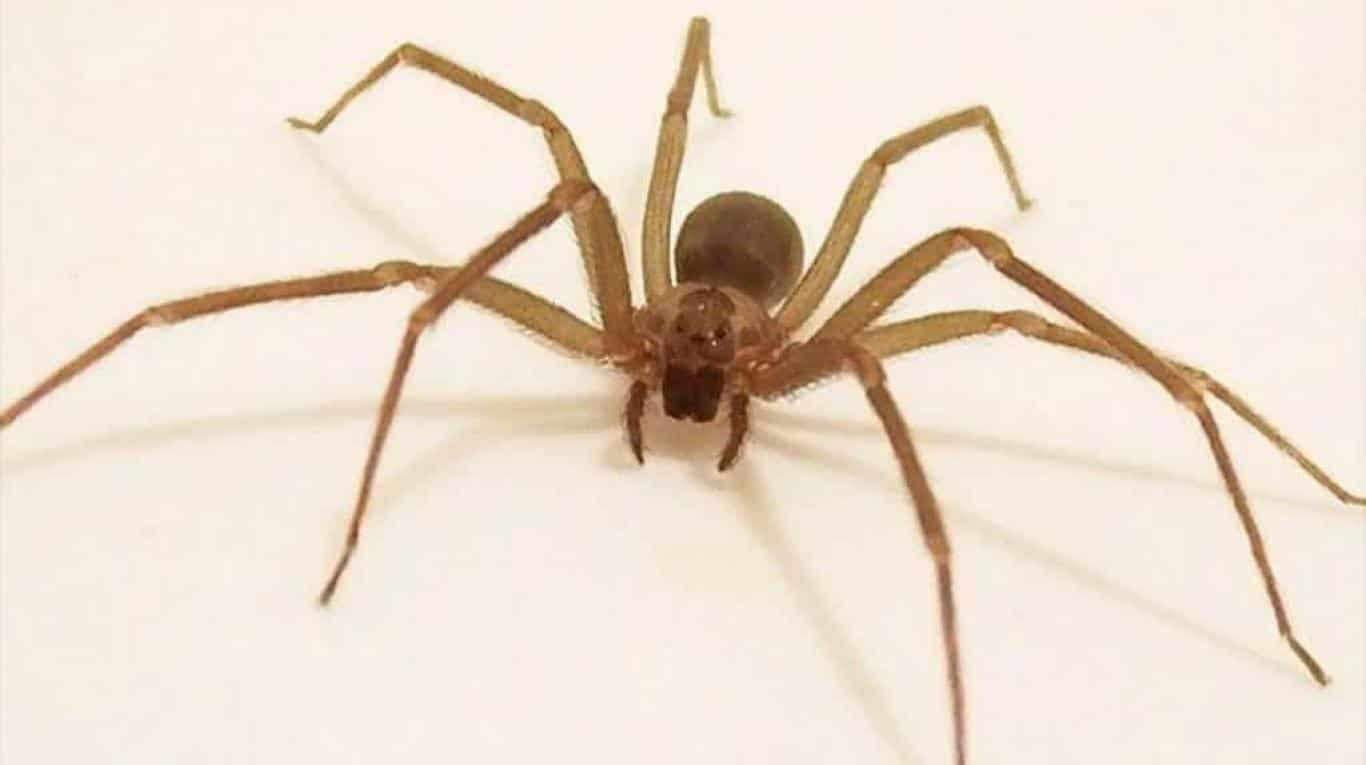 Arañas-2