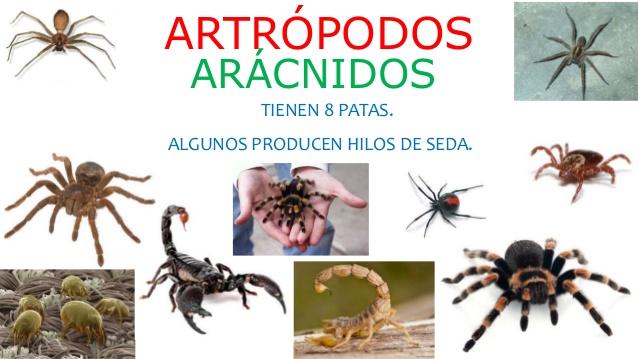 arácnidos-1