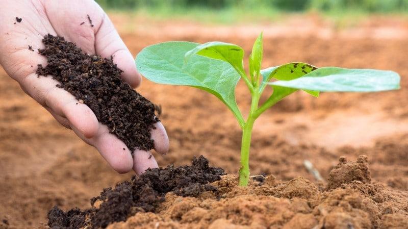 Importancia del suelo