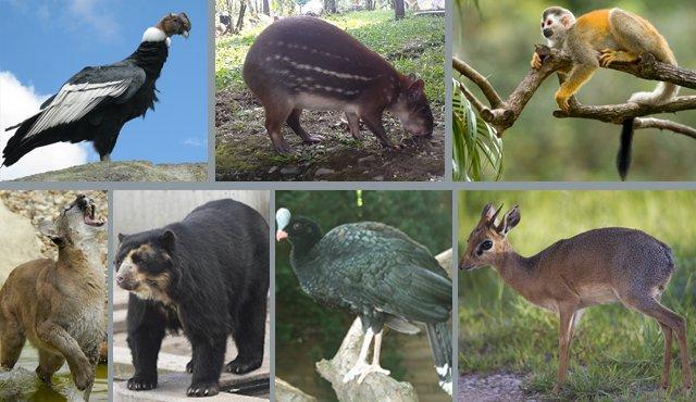 Animales del Páramo