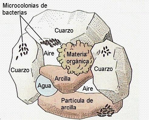 Componentes del suelo
