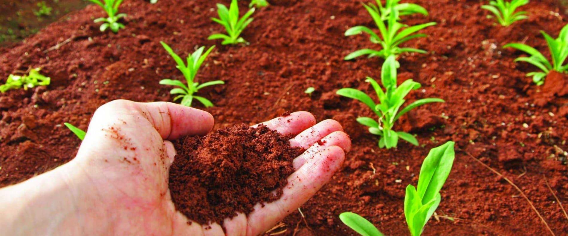 nutrientes del suelo-2