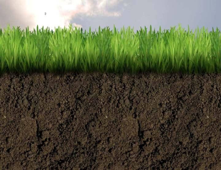 suelos humíferos-1
