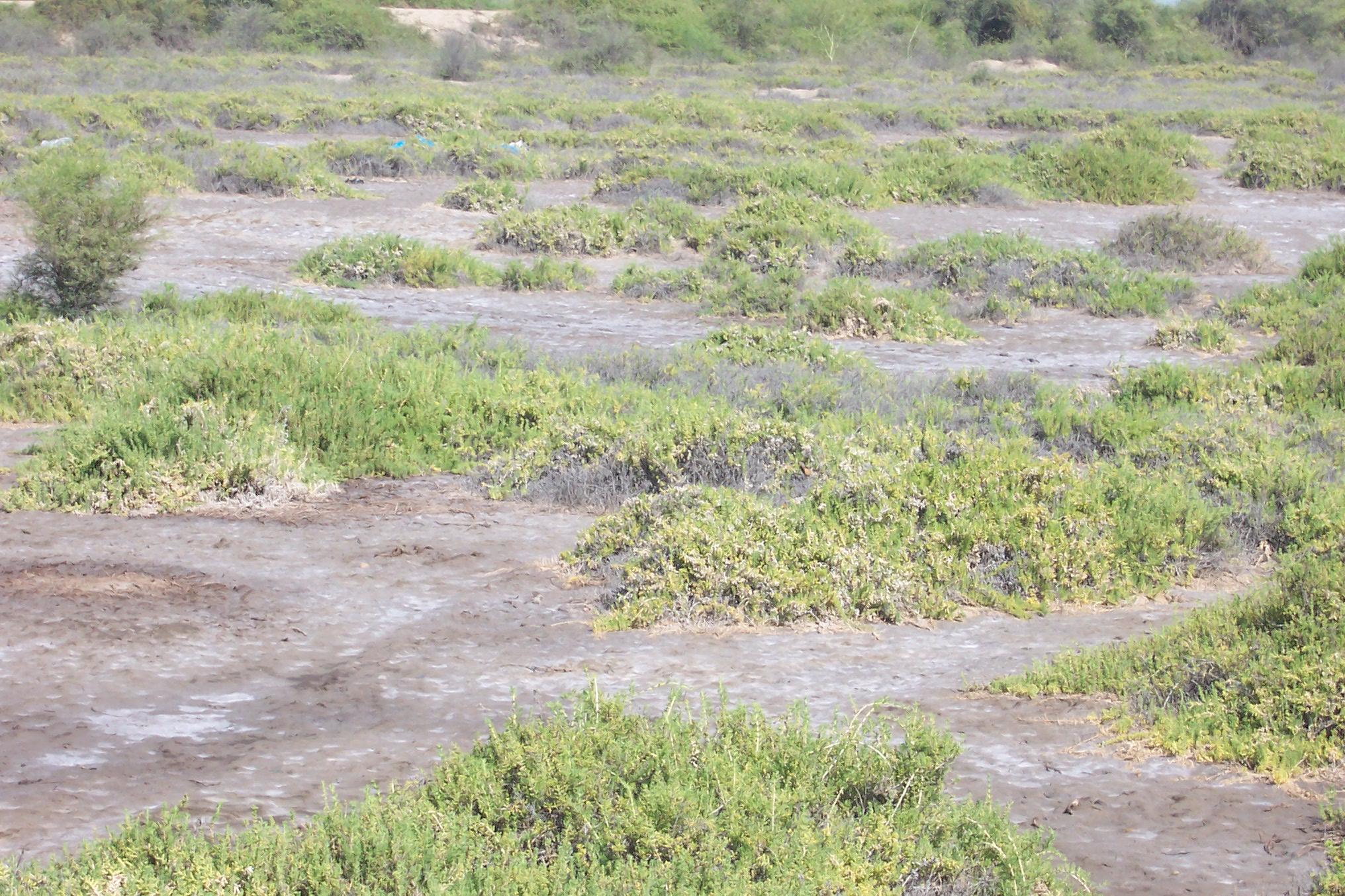 suelos salinos-1