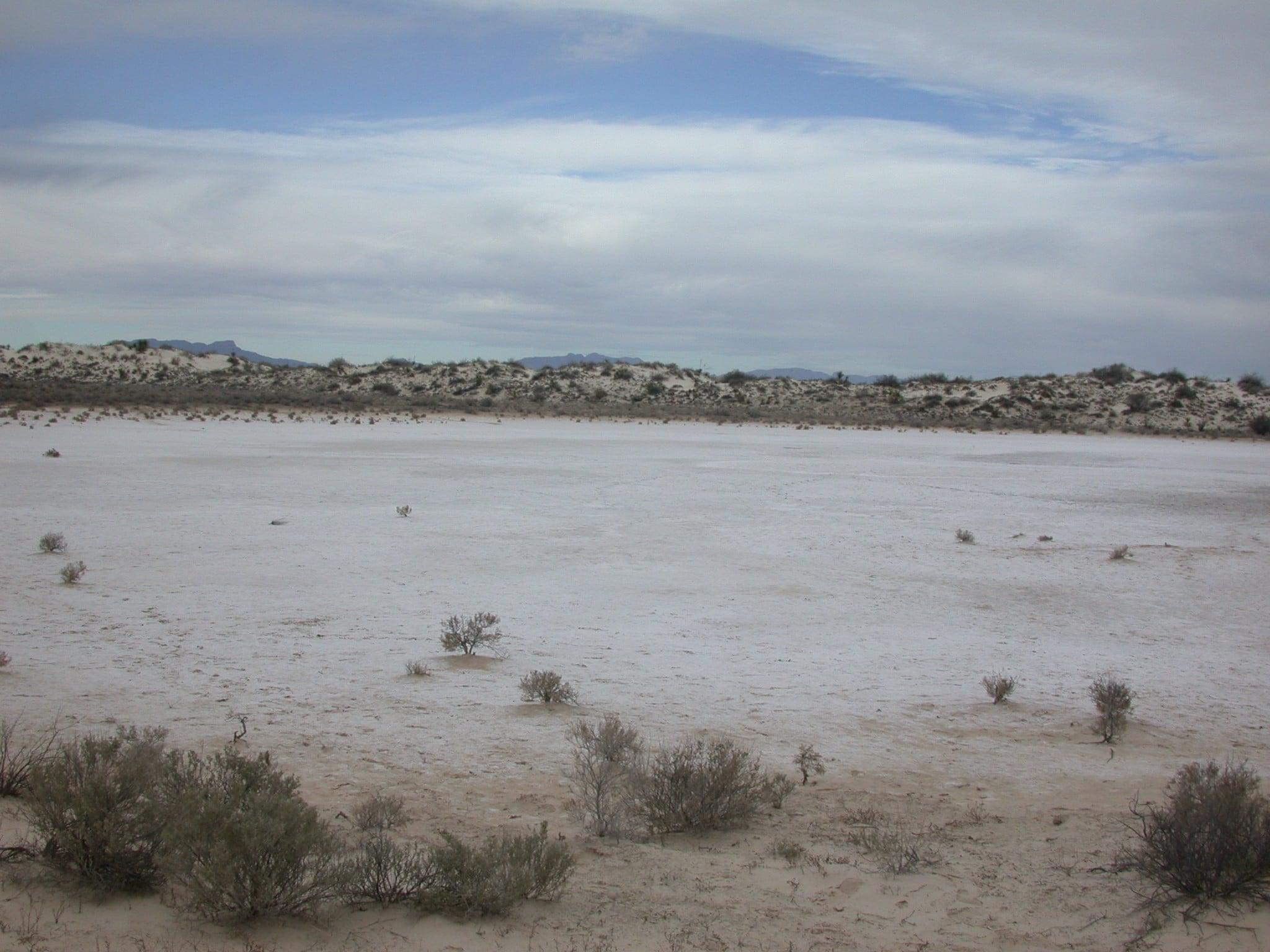 suelos salinos-2